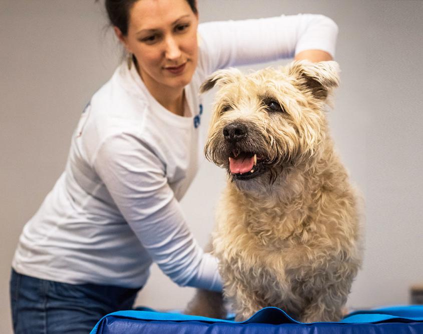 dierfysiotherapie behandeling - chiropractie hond