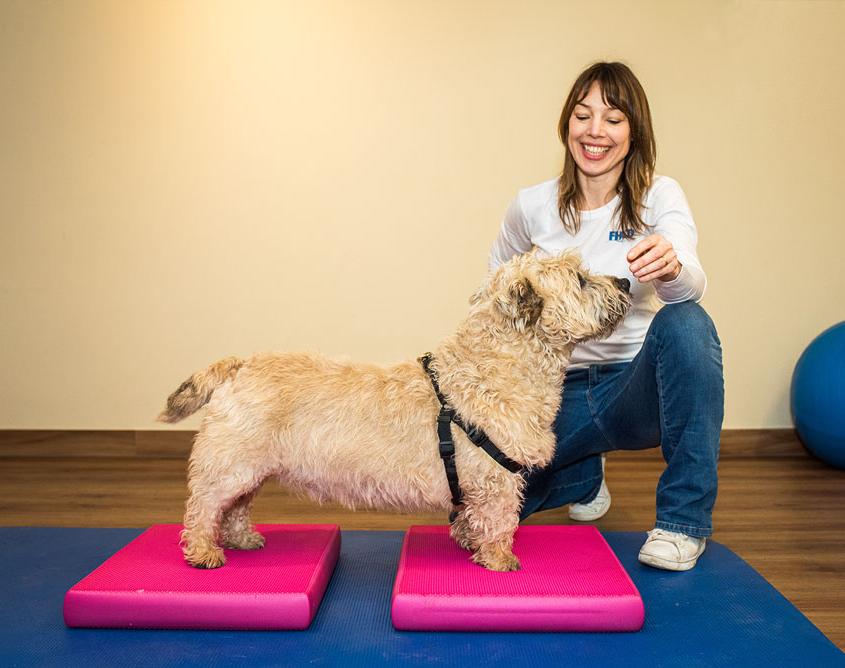 dierfysiotherapie behandeling - oefentherapie hond balanskussens