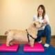oefentherapie-honden-groepstraining-fhcd