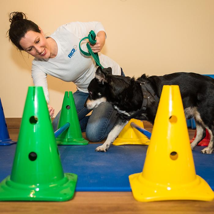 fysiotherapie-hond-oefentherapie